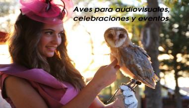 Aves para audiovisuales, celebraciones y eventos